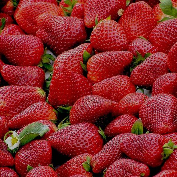 Naturbelassene Produkte - Obst Qualität